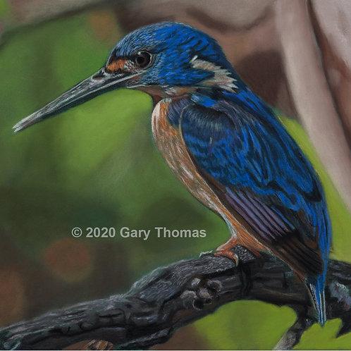 SOLD - Azure Kingfisher Original Pastel