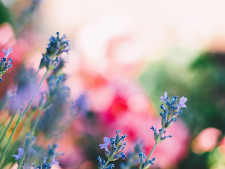 Why we Cleanse on the Spring Equinox