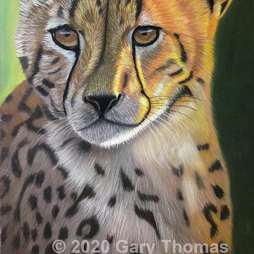 SOLD - Original Cheetah Pastel Painting