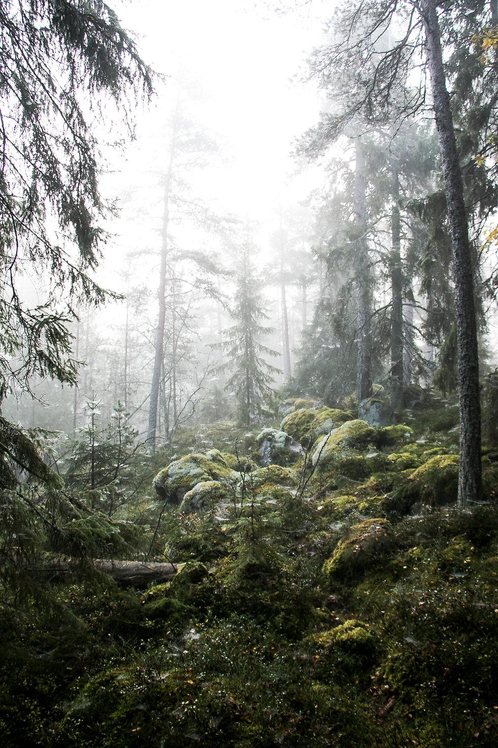 Baumen auf einem Moor in Schweden. Foto von Västernorrland, Nordschweden.
