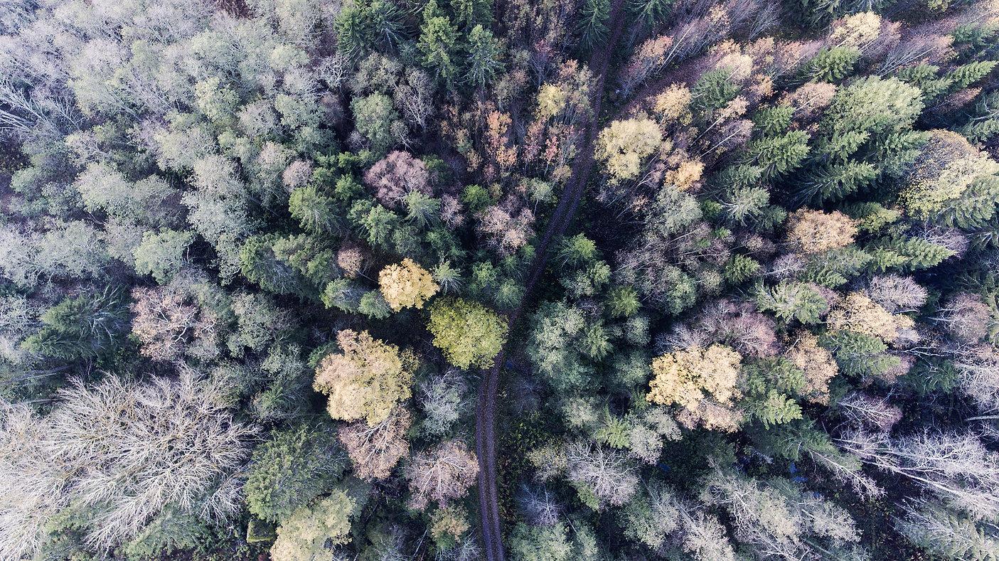 Schwedischer Wald in verschiedenen Herbstfarben. Diese schwedische Foto ist von oben fotografiert.
