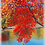Thumbnail: North Country Collection