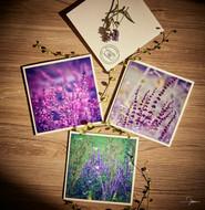 Grußkarten Pflanzenmotive