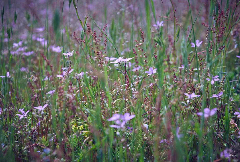 Natur-Wiesenblumenfeld