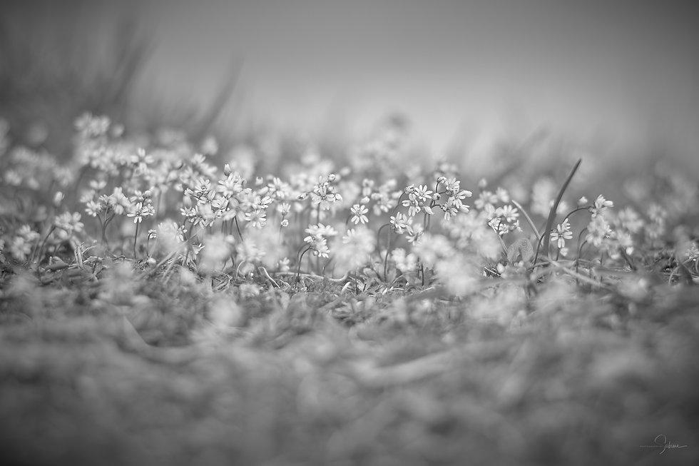 Schwarz Weiß Fotografie Natur