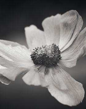 Blumen schwarz weiß Fotografie