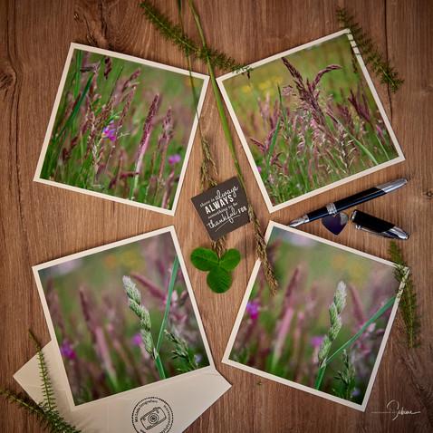 Grußkarten Gräser