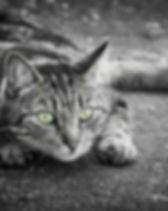 Katze 1.jpg
