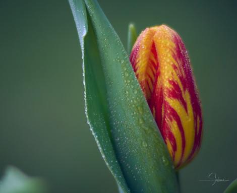 Frühling 16.jpg