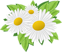 Camomile_1_077.png