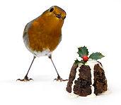 christmas-robin-tim-gainey.jpg