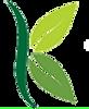 Logo Solo K Leaf no words Good.png