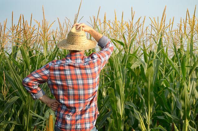 middle-aged-caucasian-farm-worker-in-str