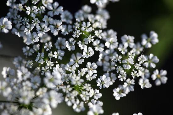 best-natural-skin-care-range-whiteflower