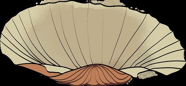 貝殼 2.png