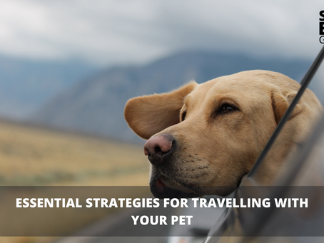Essential Strategies for travelling with your pet