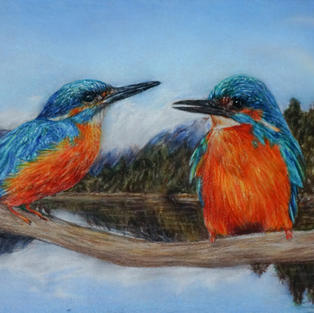"""""""River Kingfishers"""", Pastel on 360 gsm toned pastel paper, 161 x 293 mm"""