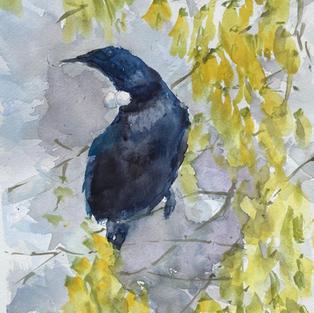 """Tui and Kowhai"", Watercolour, 210 x 297 mm"