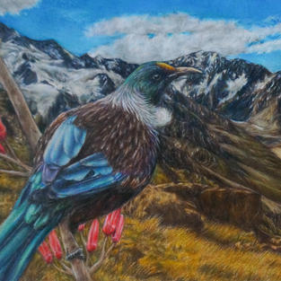 """""""The Tui"""", Coloured pencil and pastel on 118 gsm toned paper, 137 x 235 mm"""