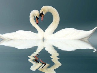 Spiritual Counselling Post 29: SOULMATES; myth or reality?