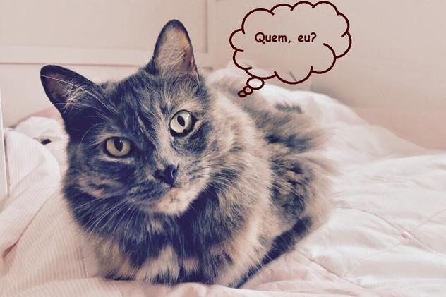"""A """"Doença do Gato"""""""