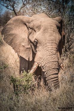 03-10-13 Kruger National Park