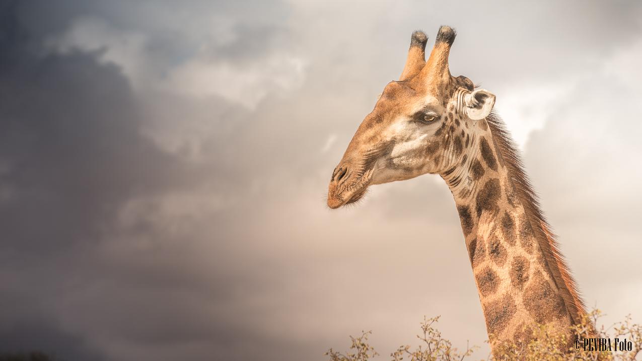 01-10-13 Kruger National Park