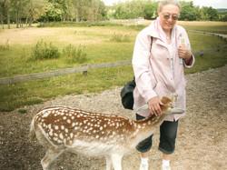 2008 Skandinavisk dyrepark