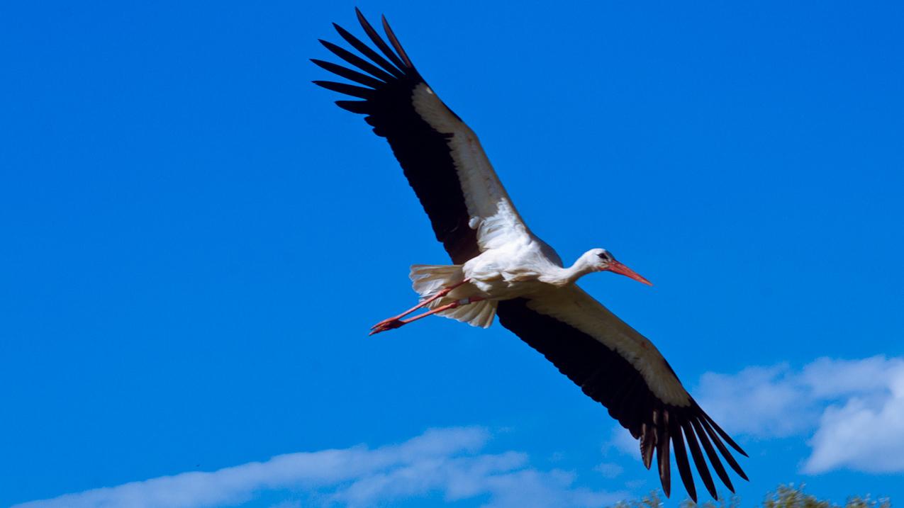 31.07.10 Storkepark