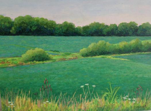 Soybean field.late spring.jpg