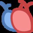 Ultraschall Herz und Arterien.png
