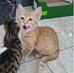 adoptie - Felton.PNG