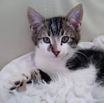 adoptie - Baileys.PNG