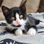 adoptie - suzy.PNG