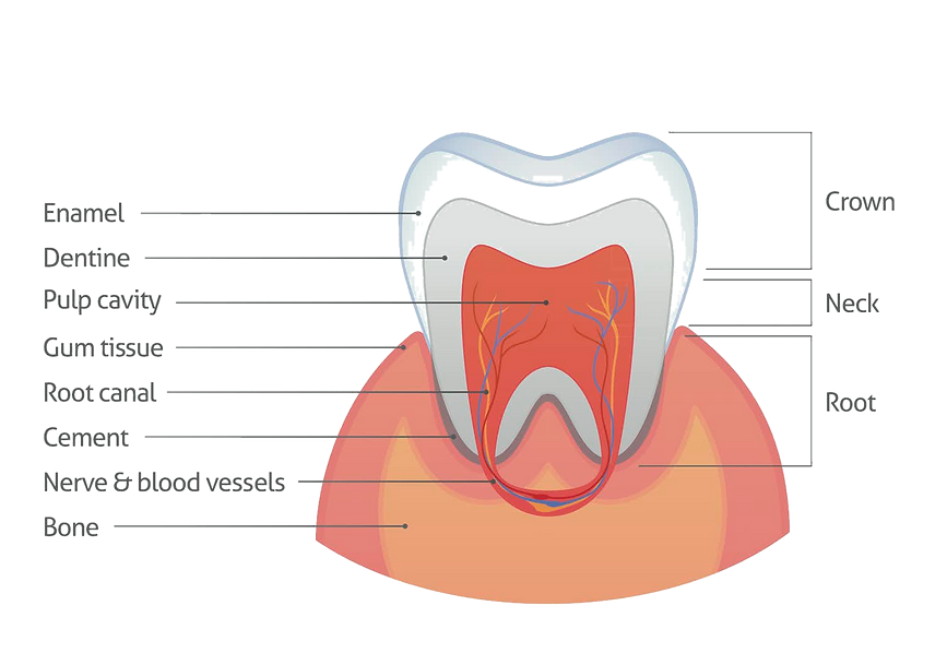 root%20canal%20dentist%20mississauga_edi