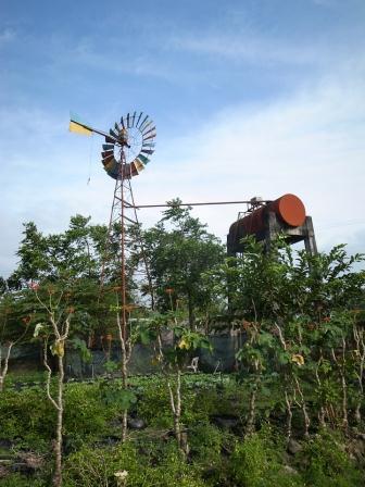 organic+farming+penalosa.jpg