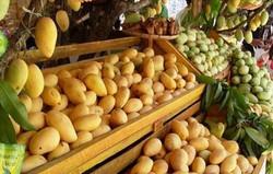 guimaras+mangoes.jpg