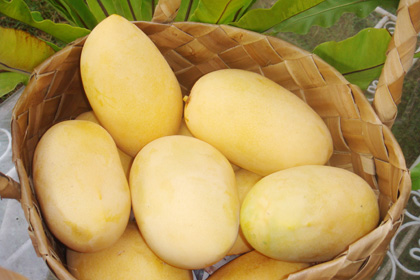 guimaras+mangoes+2.jpg
