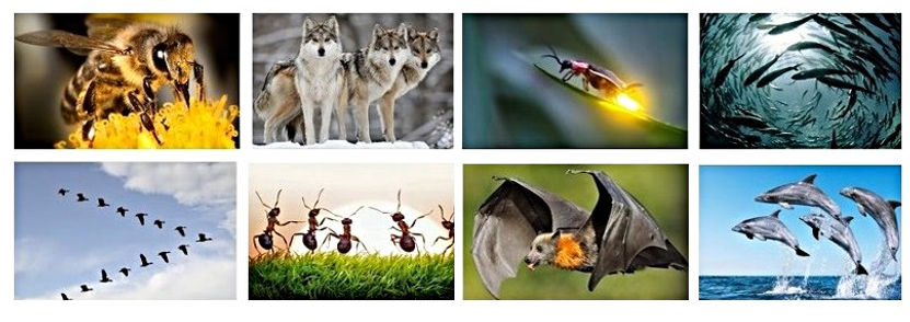 natureinspiredalgorithms_edited.jpg