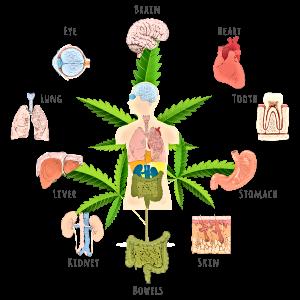 cannabinoid-effect.png