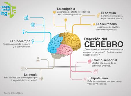 ¿Cómo reacciona el Cerebro cuando deseamos un producto?