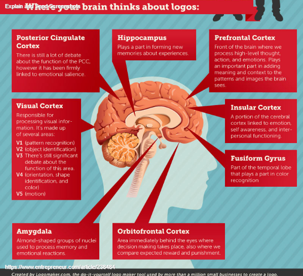 The Incredible Way Your Brain 'Sees' a Logo (Infographic) (4)