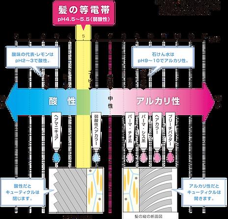 アルカリ→酸性.png