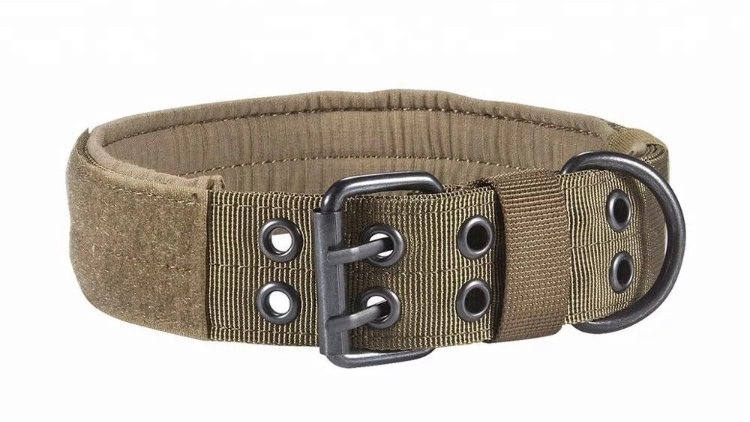 Twin Buckle Collar