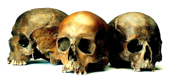 Roman Walbrook skulls (c) MOLA.jpg