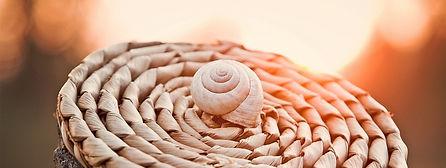 snail-1229894_960_720_bearbeitet_edited.