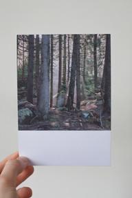 pk039 Wald IV