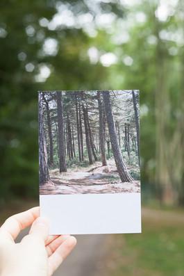 pk015 Wald