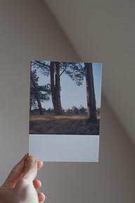 Küstenwald IV