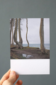 Küstenwald II